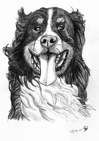 Dieren hond