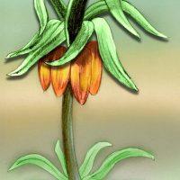 bloem kleur