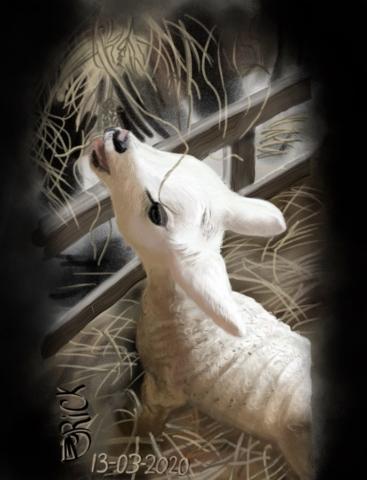 Schaap dier dieren