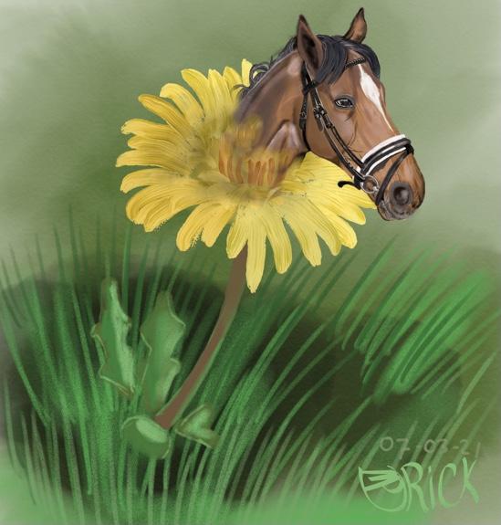 Dier natuur bloem dieren paard